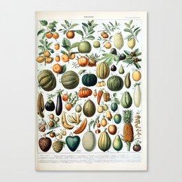 Adolphe Millot Fruits B Canvas Print