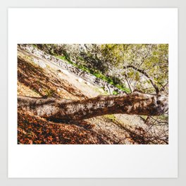 Tree Root in Arizona Art Print