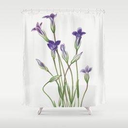 Gentian (Gentiana holopetala) (1936) by Mary Vaux Walcott Shower Curtain