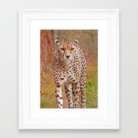 cheetah Framed Art Prints featuring Cheetah by Chris Thaxter