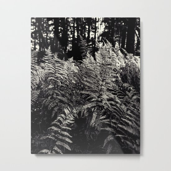 ferns in black and white Metal Print