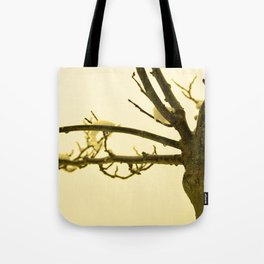 Snow settled on a bare tree Tote Bag