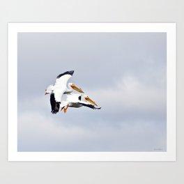Pelicans Art Print