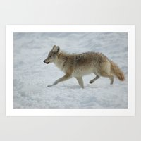 coyote Art Prints featuring Coyote. by DC Duke