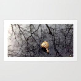 Tiny Snail Art Print