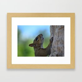 Nuts About Squirrels Framed Art Print