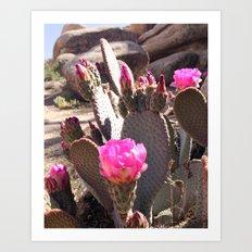 Joshua Tree Cactus Bloom Art Print
