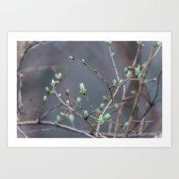 Spring Buds After Rain Art Print