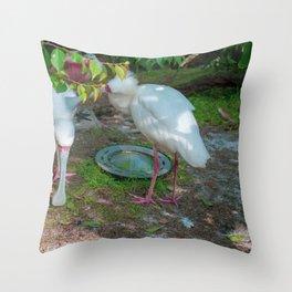 African Spoonbill Throw Pillow