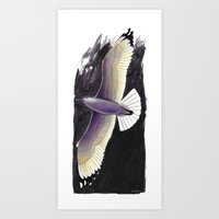 Herring Gull Art Print