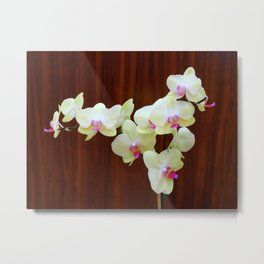 Ivory Orchid wc Metal Print