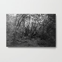 Old Growth Forest - Study II Metal Print