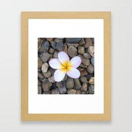 Frangipani Framed Art Print
