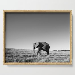 Lone female elephant walking along African savanna Serving Tray