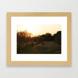 perso tra gli alberi di ulivo Framed Art Print