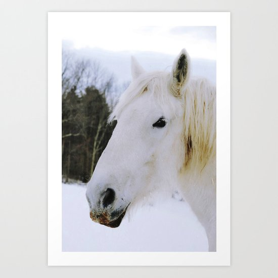 Lovely White Horse Art Print