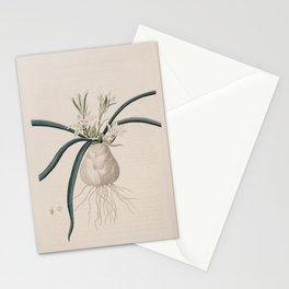 Flower 555 ornithogalum fimbriatum Hairy leaved Star of Bethlehem13 Stationery Cards