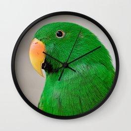 Eclectus Portrait  Wall Clock
