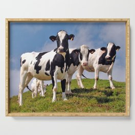 Young Holstein cows Serving Tray