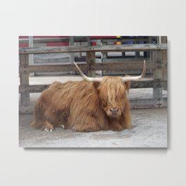 My Name is Shaggy. Is Anyone There? Metal Print