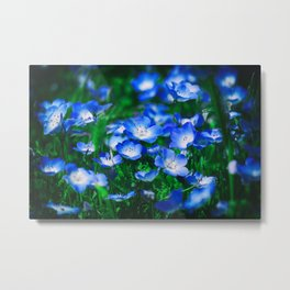 Baby Blue Eyes Fowers Metal Print