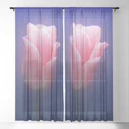 Romantic Pink Solo Tulip On Blue Background Sheer Curtain