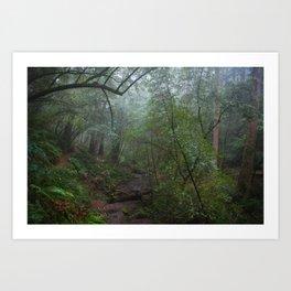 cataract creek in fog Art Print