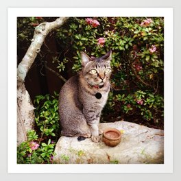 Cat on a Rock Art Print