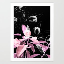 Pink Black Beauty Art Print