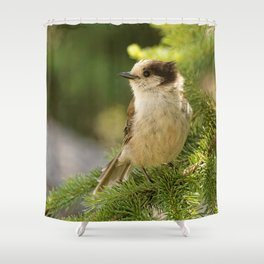 Profile of a Grey Jay / Whiskeyjack Shower Curtain