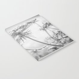 Queen Anne's Lace in Black and White Notebook