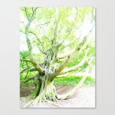 The Bewitched Tree 7 Canvas Print