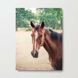 Vintage photograph of an horse Metal Print