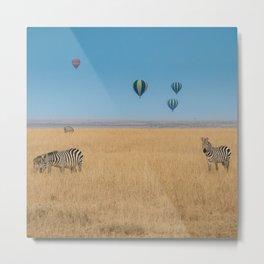 Zebras and baloons Metal Print