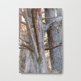 Trees with Lichen Metal Print