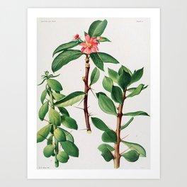 Britton & Rose Vol 1 Art Print