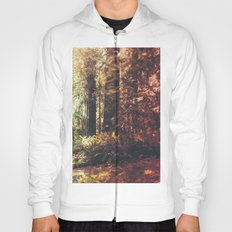 Beautiful California Redwoods Hoody