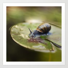 Snailing Art Print