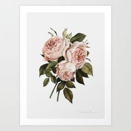 Three English Roses Art Print