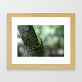 Green Anole Framed Art Print