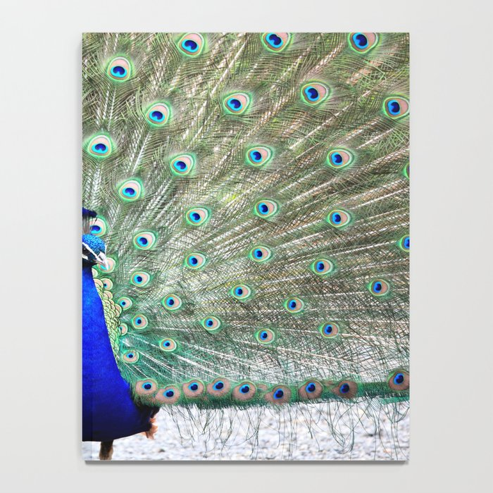 Peacock Feathers Notebook