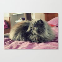 persian Canvas Prints featuring Persian by Astrid P