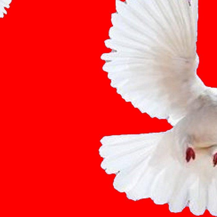 FLOCK OF WHITE PEACE DOVES ON RED COLOR Leggings