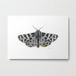 Kintsugi - A Graphite Drawing of a Moth by Brooke Figer Metal Print