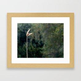 Small Beauty. Framed Art Print