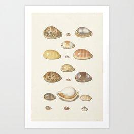 Vintage Seashell Chart I Art Print