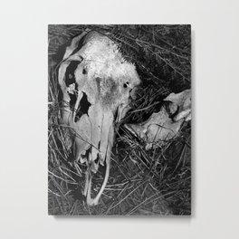 Bear Wallow Metal Print
