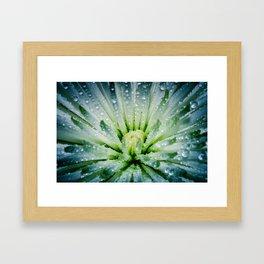 Wet Flower Framed Art Print