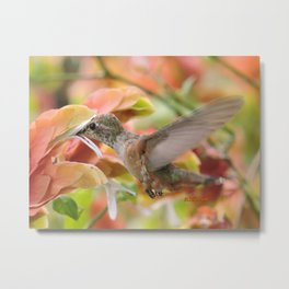 Little Ms. Hummingbird in for More Licks Metal Print