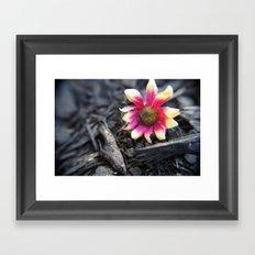 Fallen Flower Framed Art Print